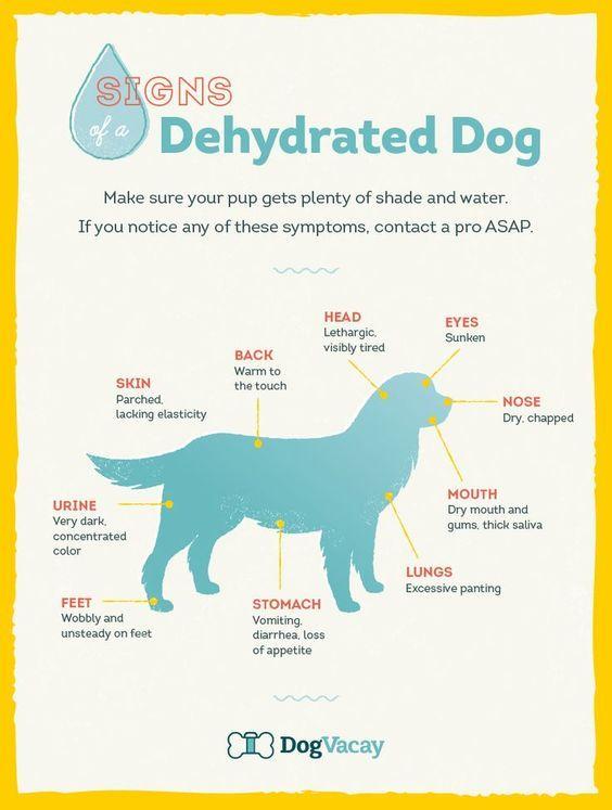 dehydrated-dog