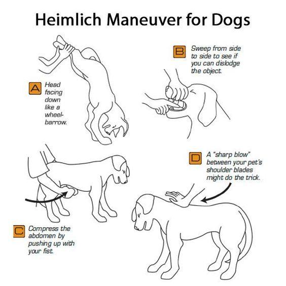 heimlich-for-dogs