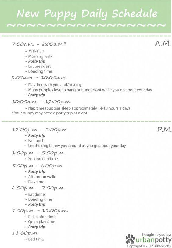puppy-schedule